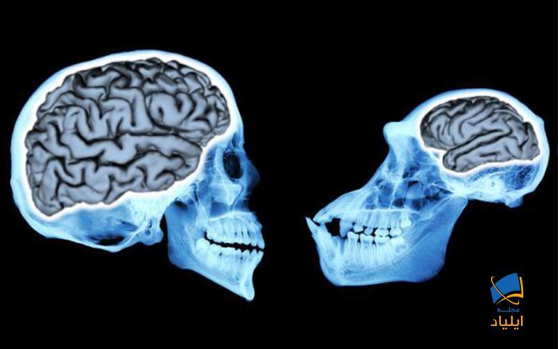 خنده در توسعهی مغز چه نقشی دارد؟