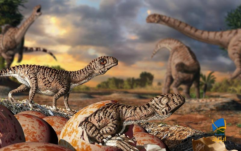 رازهایی در مورد تخم دایناسورها