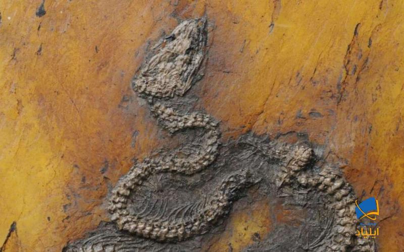 کشف قدیمیترین فسیل افعی در اروپا