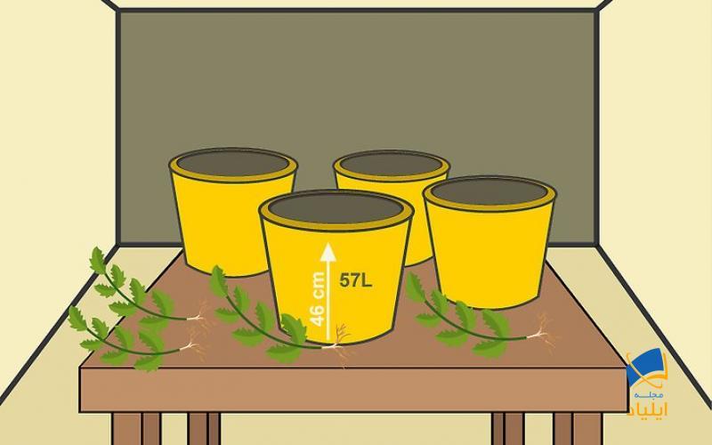 خرید گیاه و گلدان