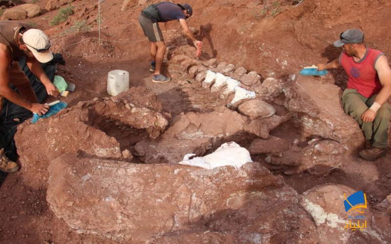 کشف بزرگترین فسیل دایناسور در آرژانتین