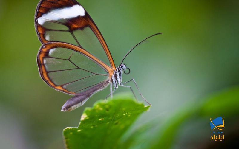 چه اسراری پس پرواز پروانهها نهفته است؟