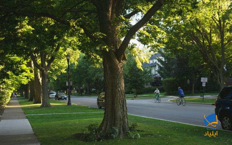 درختان خیابانی خطر بروز افسردگی را کاهش میدهند