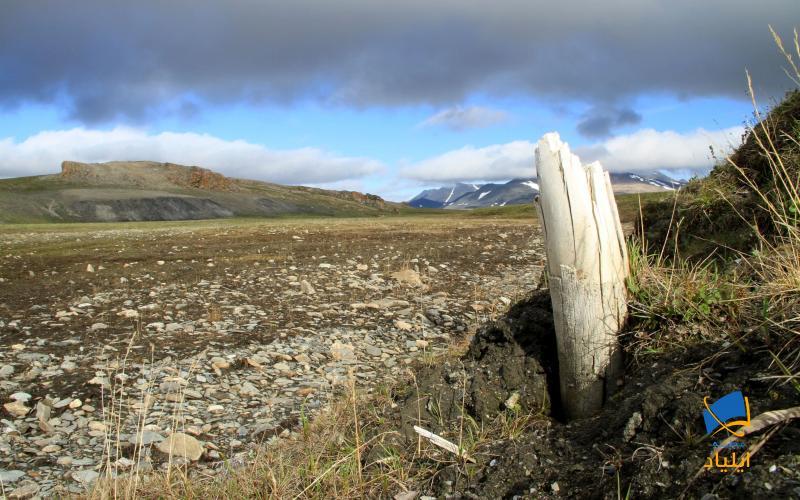 چگونه قدیمیترین دیانای جهان کشف شد؟