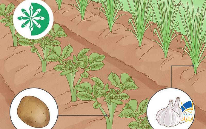 چگونه باغچه را برای کاشت در بهار آماده کنیم؟