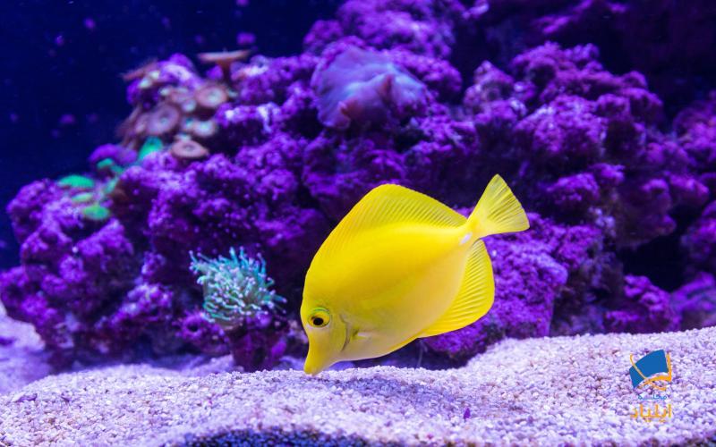 نقش ماهیها در چرخهی کربنی زمین