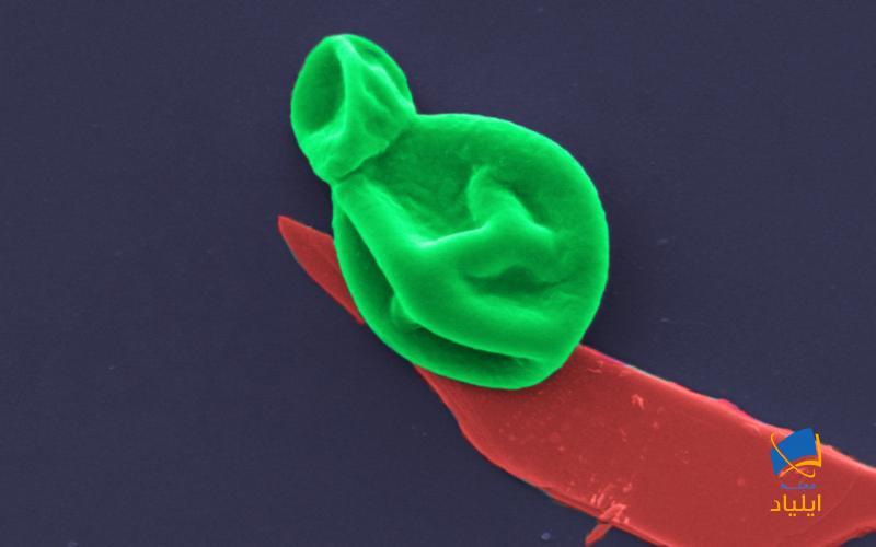 روکشی که فعالیت ضدمیکروبی دارد