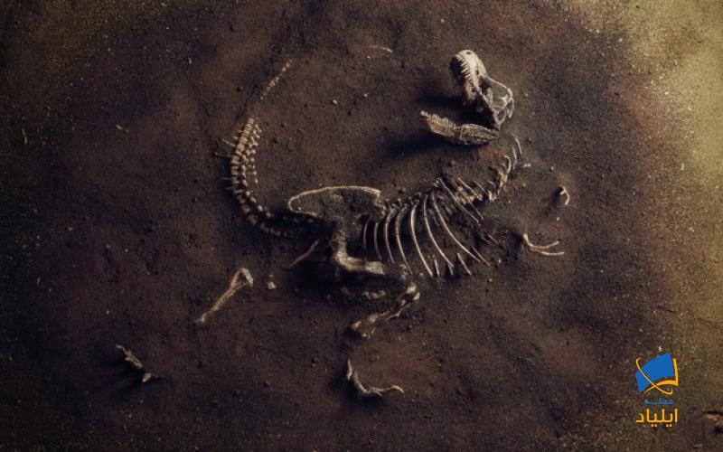 چگونه میتوان فسیل کشف کرد؟