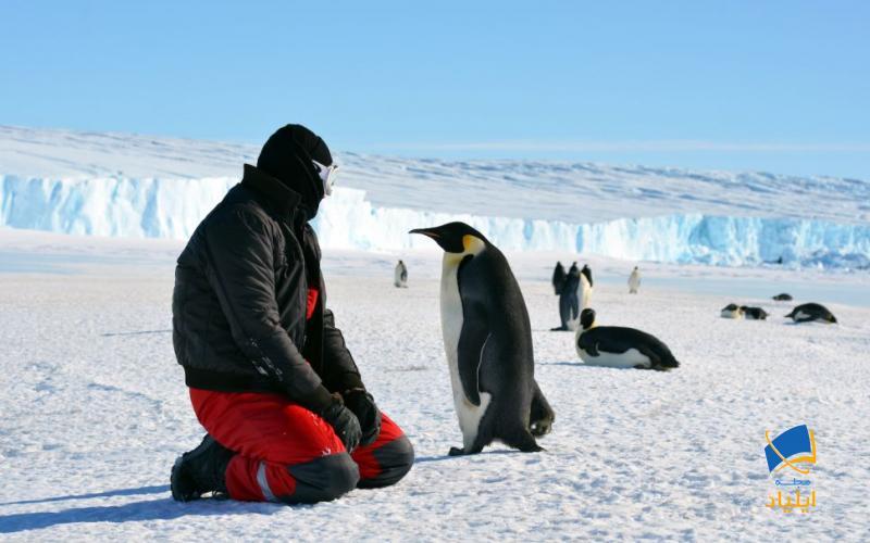 جنوبگان؛ صلحآمیزترین قارهی جهان