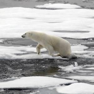 آیا زمین برای حیوانات جای ناامنی شده است؟