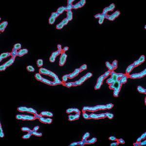 چقدر از جرم بدن ما متعلق به کروموزومهاست؟